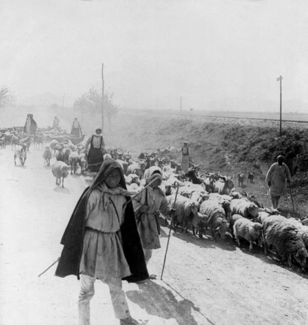 Sheep Poster featuring the photograph Greece Shepherds And Flocks - C 1909 by International Images