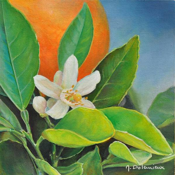 Acrylic Painting Poster featuring the painting Orange Posee by Muriel Dolemieux