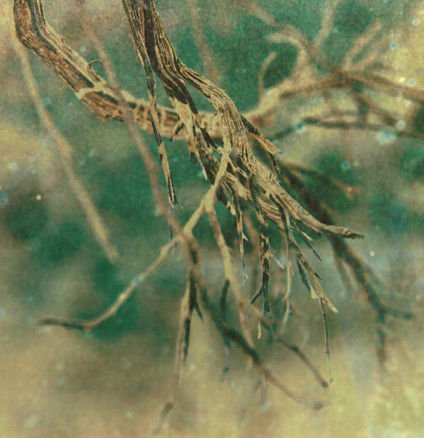 Tree Poster featuring the photograph Organic by Mark Ross