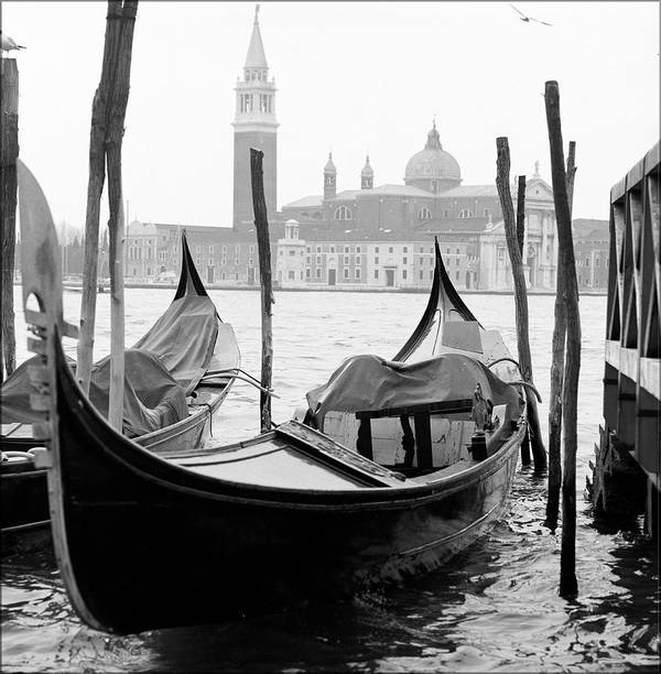 Vertical Poster featuring the photograph Seagull From Venice - Venezia by Bronco - J. Heiligensetzer