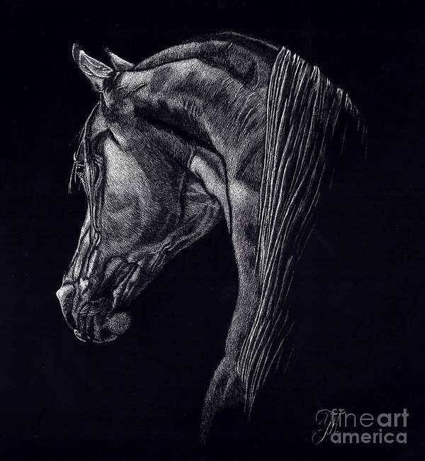 Horse Poster featuring the drawing Shadow by Yenni Harrison