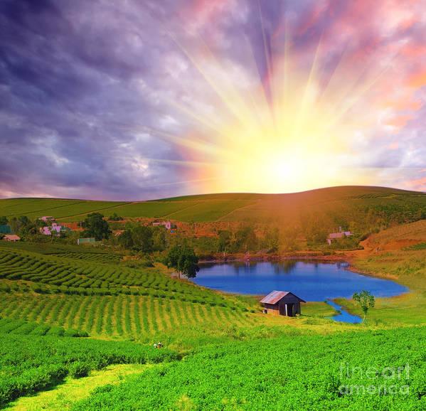Sun Poster featuring the photograph Tea Plantation by MotHaiBaPhoto Prints