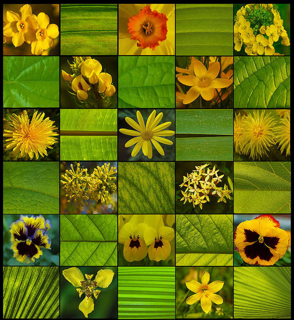 Fine Art Poster featuring the photograph Yellow Blossoms by Fine Art Photography