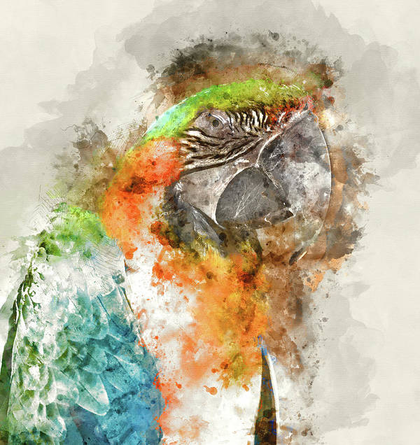 Animal Poster featuring the photograph Green And Orange Macaw Bird Digital Watercolor On Photograph by Brandon Bourdages
