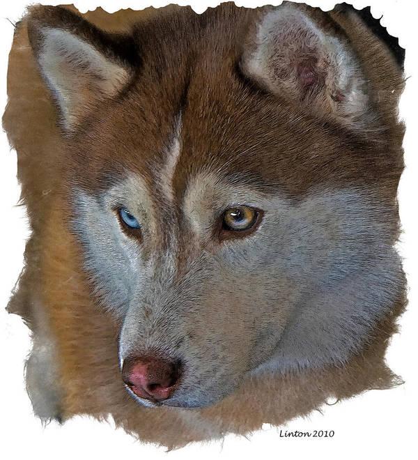 Siberian Husky Poster featuring the ceramic art Siberian Husky by Larry Linton