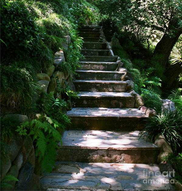 Nature Poster featuring the photograph Stone Steps by Dean Triolo