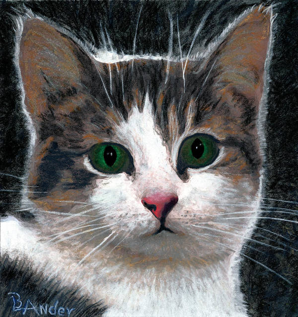 American Shorthair Poster featuring the drawing Are You Talking To Me by Brent Ander
