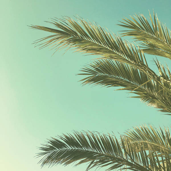 Palm Trees Poster featuring the photograph Autumn Palms II by Cassia Beck
