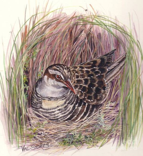 Bird Poster featuring the painting Banded Rail by Val Stokes