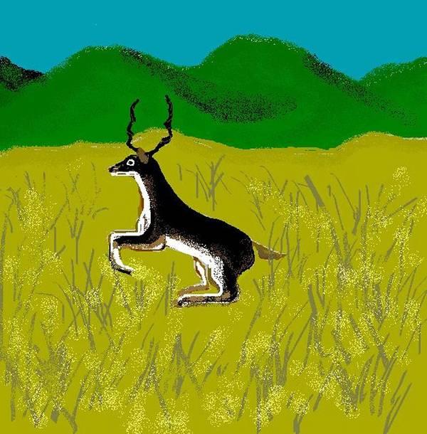 Deer Poster featuring the digital art Black Buck by Carole Boyd