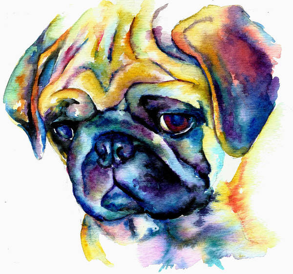 Pug Art Poster featuring the painting Blue Pug by Christy Freeman