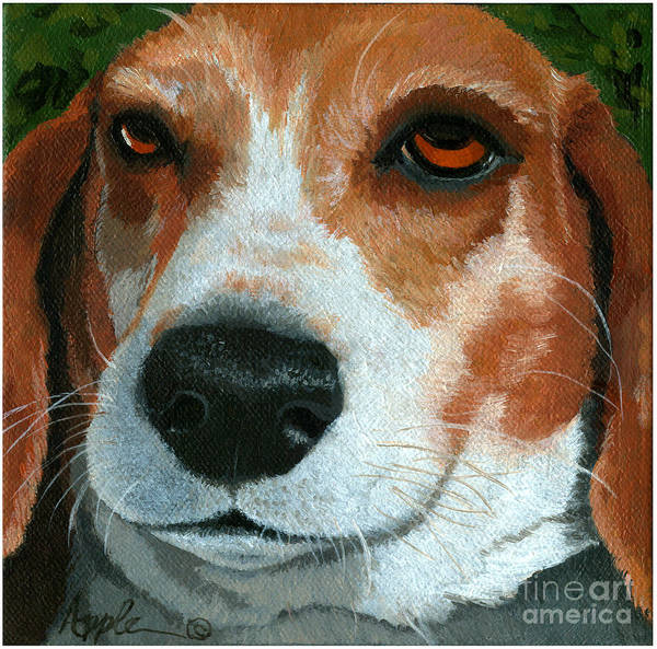 Dog Art Poster featuring the painting Bonnie - Beagle Painting by Linda Apple