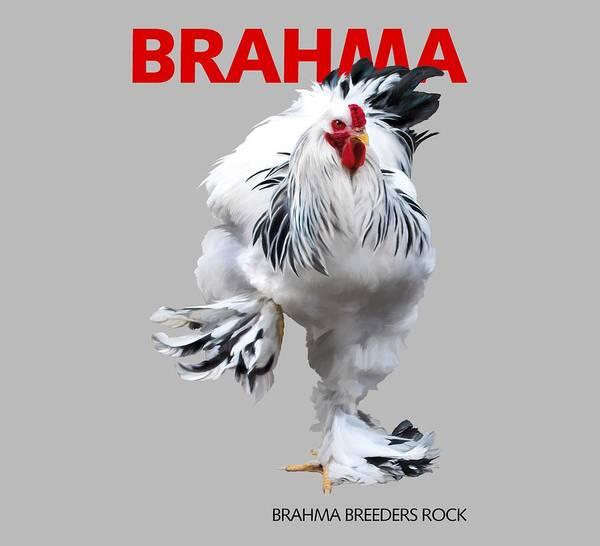 Brahma Poster featuring the digital art Brahma Breeders Rock RED by Sigrid Van Dort