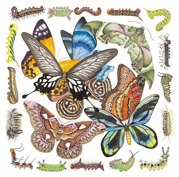Butterflies Poster featuring the painting Butterflies Moths Caterpillars by Lucy Arnold