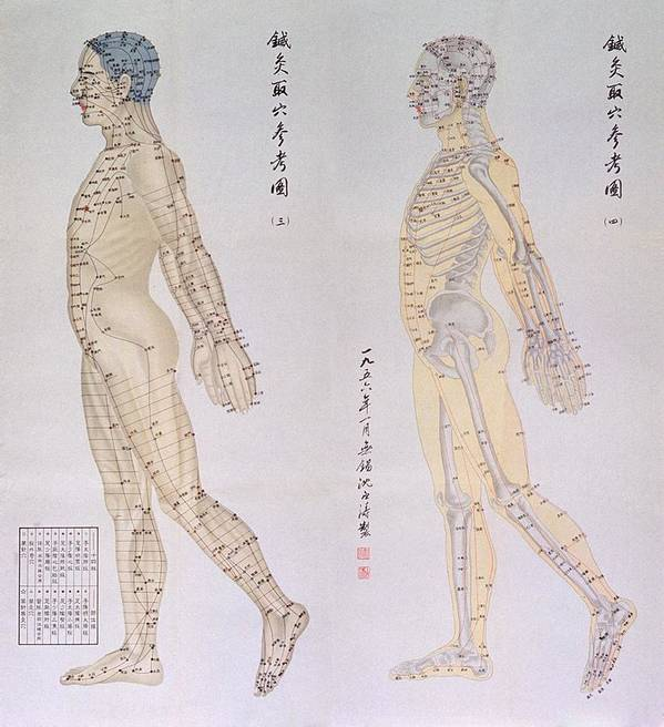 History Poster featuring the photograph Chinese Chart Of Acupuncture Points by Everett