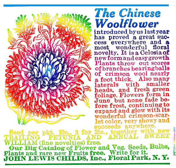 Chinese Woolflower Poster featuring the digital art Chinese Woolflower by Eric Edelman