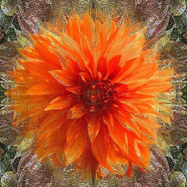 Digital Art Poster featuring the photograph Chrysanthemum by Tom Romeo