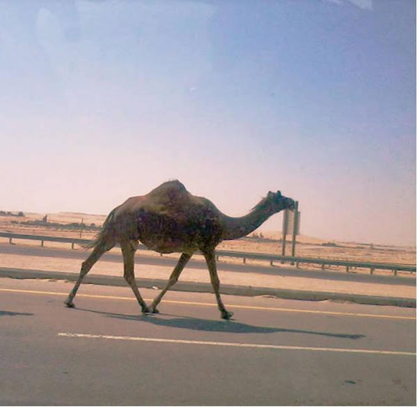 Desert Poster featuring the photograph Desert Safari by Nick Photography