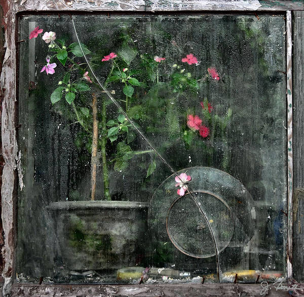 Window Poster featuring the photograph Drizzled Window by Joe Bonita