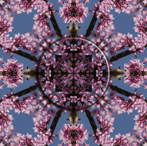 Mandala Poster featuring the photograph Eastern Red Bud Mandala by Alan Skonieczny