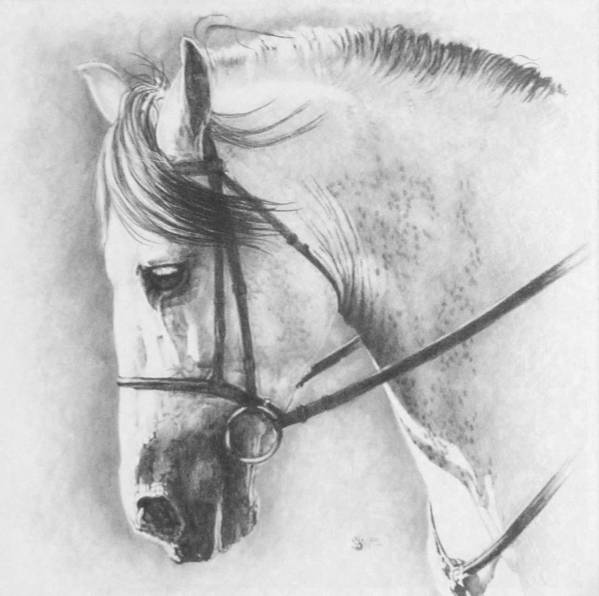 Horse Poster featuring the drawing Ethereal by Barbara Keith