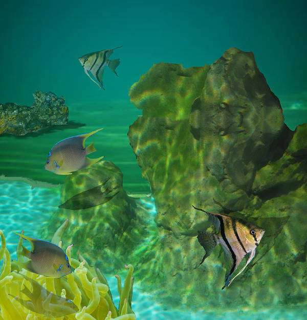 Fish Poster featuring the photograph Fish Tank by Margit Gentile