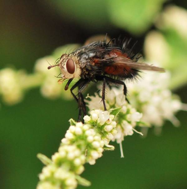 Fly Poster featuring the photograph Fly Beauty by Michelle DiGuardi
