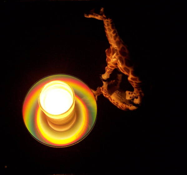 Giraffe Poster featuring the photograph Illuminated Objects by Michelle Miron-Rebbe