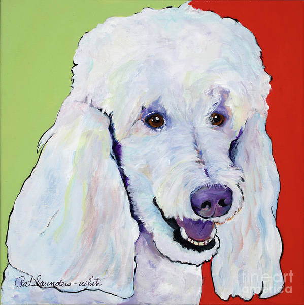 Standard Poodle Poster featuring the painting Jackson by Pat Saunders-White