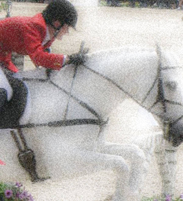 Horse Poster featuring the photograph Jumpers by Donna Thomas