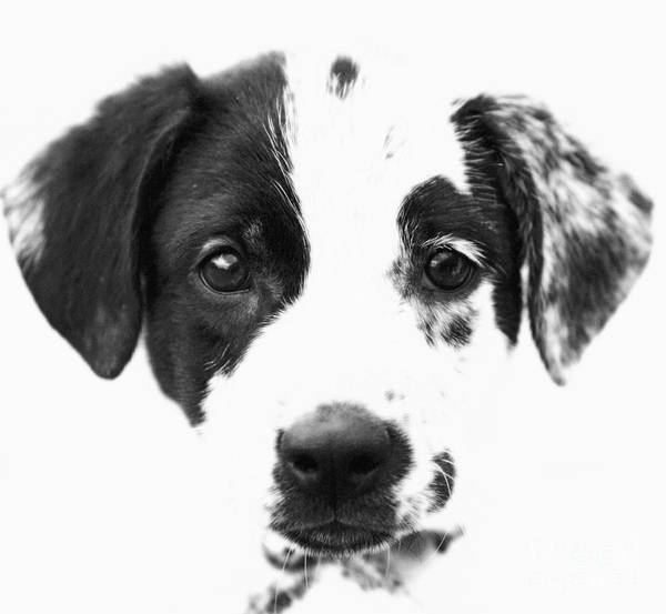 Dogs Poster featuring the photograph Karma by Amanda Barcon