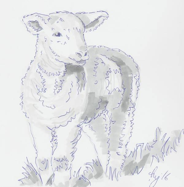Lamb Drawing Using Marker Pen Poster By Mike Jory