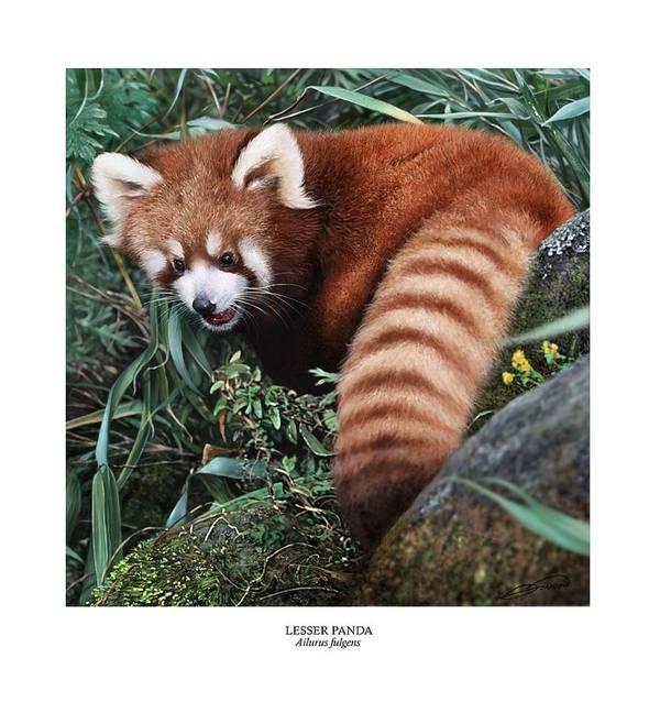 Panda Poster featuring the digital art Lesser Panda Ailurus Fulgens by Owen Bell