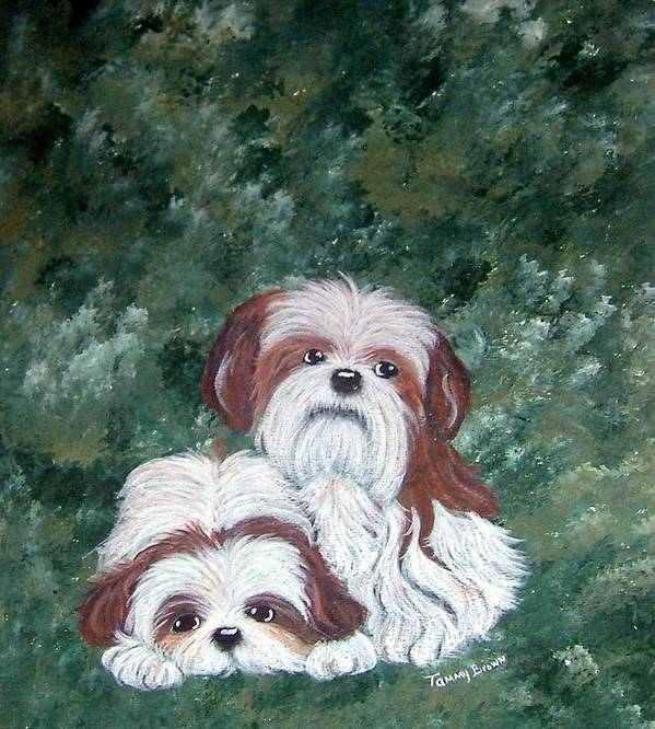 Shih Tzu Poster featuring the painting Loving Shih Tzu by Tammy Brown