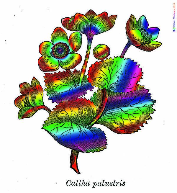 Marsh Marigold Poster featuring the digital art Marsh Marigold by Eric Edelman