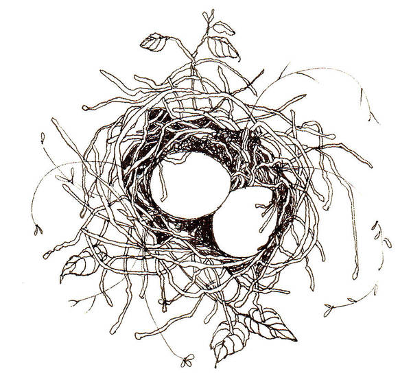 Nest Poster featuring the drawing Moms Nest by Deborah Wetschensky