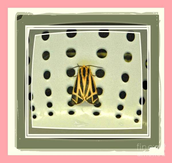 Poster featuring the photograph Moth In My Kitchen by Shirley Moravec