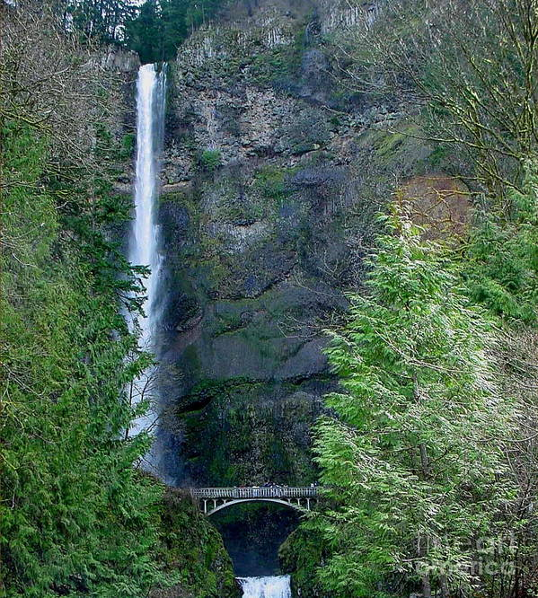 Waterfall Poster featuring the photograph Multnomah Falls by PJ Cloud