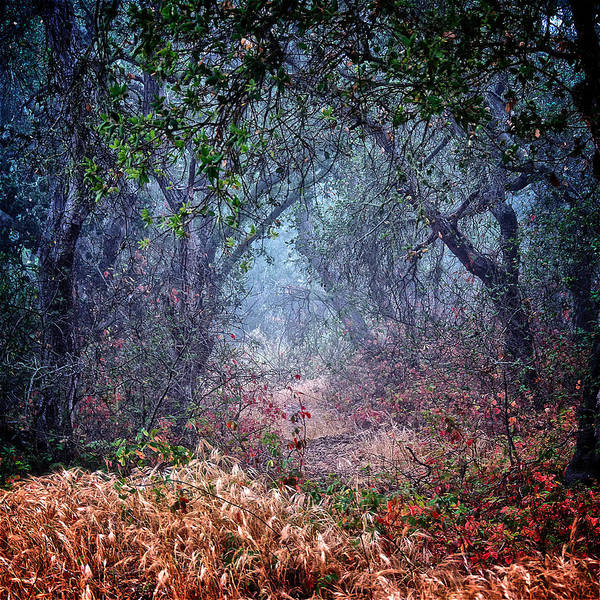 Nature Poster featuring the photograph Nature's Chaos, Arroyo Grande, California by Zayne Diamond Photographic