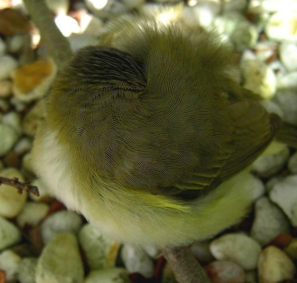 Bird Poster featuring the photograph Nestling Bird by Caroline Urbania Naeem