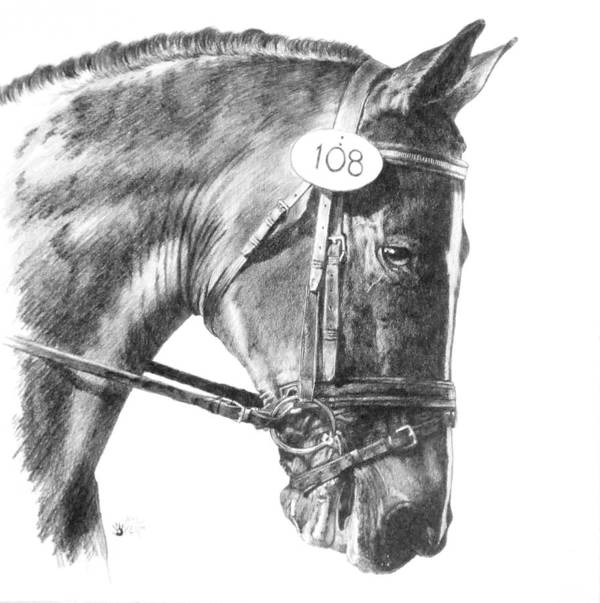 Horse Poster featuring the drawing Opaque by Barbara Keith