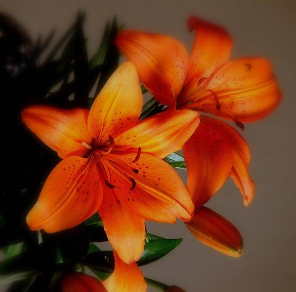 Orange Poster featuring the photograph Orange Lilies by Judy Waller