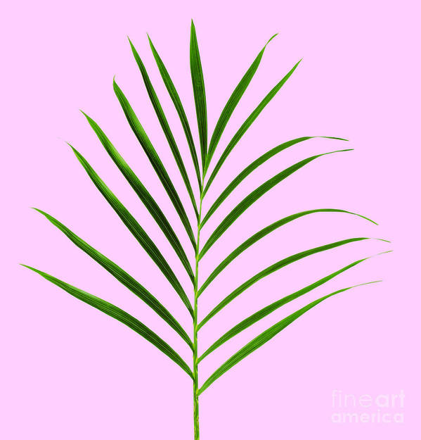Palm Poster featuring the photograph Palm Leaf by Tony Cordoza