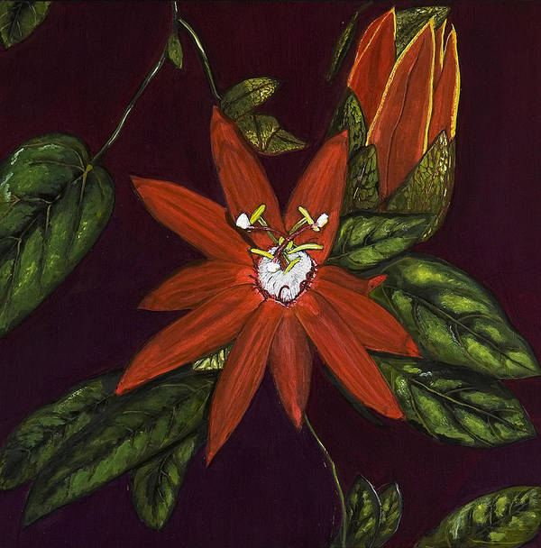 Flower Poster featuring the painting Passion Flower by Rita Cortesi
