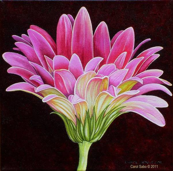 Acrylic Poster featuring the painting Pink Gerbera Daisy by Carol Sabo