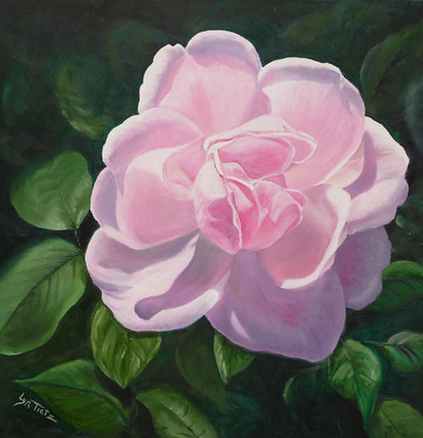 Poster featuring the painting Pink Rose by Lyn Tietz