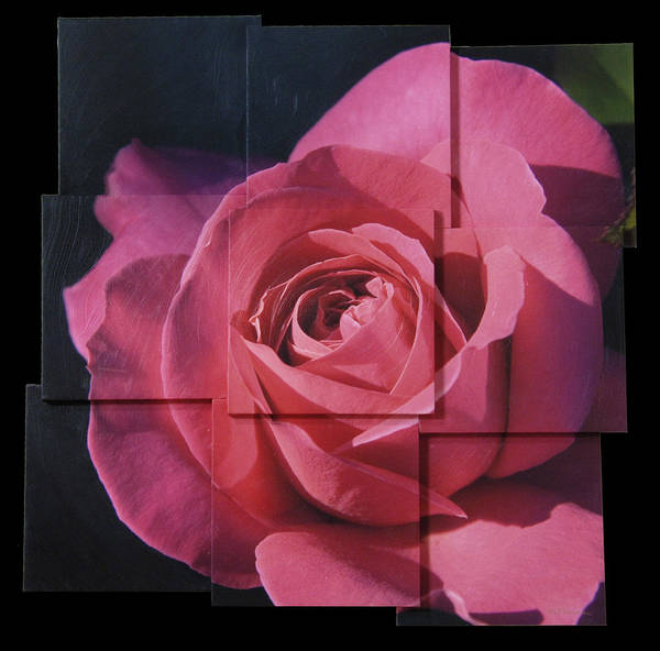 Rose Poster featuring the sculpture Pink Rose Photo Sculpture by Michael Bessler