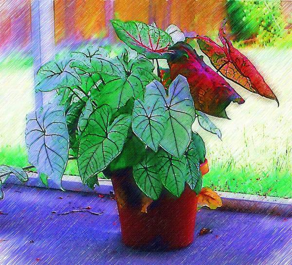 Garden Poster featuring the photograph Potted Plant by Donna Bentley