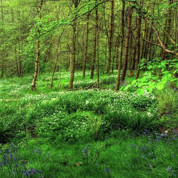 Nature Poster featuring the photograph Ramsons And Bluebells, Bentley Woods by John Edwards