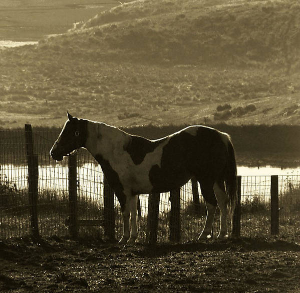 Horse Poster featuring the photograph Reflected Light by Donna Thomas